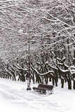 Winter landscape with bench in park Stock Images