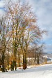 Winter landscape, bench under the snow, trees with yellow leaves Royalty Free Stock Photography