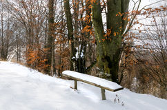 Winter landscape, bench under the snow, trees with yellow leaves Stock Images