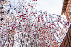 Winter landscape with berries of a mountain ash on a tree Stock Photos