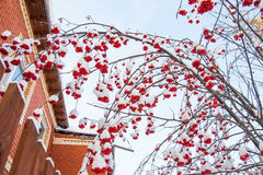 Winter landscape with berries of a mountain ash on a tree Royalty Free Stock Photo