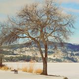 Winter landscape. Big tree small park bench Royalty Free Stock Photography
