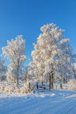 Winter Landscape with a birch tree Royalty Free Stock Image
