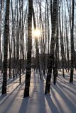 Winter landscape with birch trees. Royalty Free Stock Photos