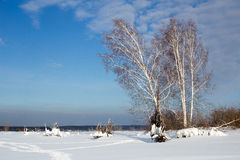 Winter landscape with birches against blue sky in Russia Royalty Free Stock Photography