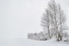Winter landscape with birches in the snow stock photo