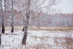 Winter landscape with a birchwood Stock Images