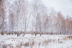 Winter landscape with a birchwood Royalty Free Stock Images