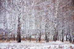 Winter landscape with a birchwood Stock Photo