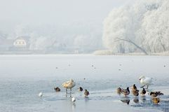 Winter landscape with birds Royalty Free Stock Image