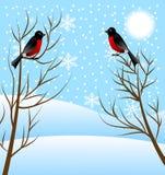 Winter landscape with birds bullfinch Stock Image