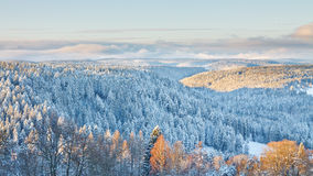 Winter Landscape in the Black Forest Stock Images