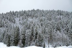 Winter landscape, Black Forest Royalty Free Stock Photos