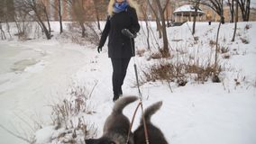 Winter landscape with blonde girl playing with siberian husky malamute dogs outside. stock video footage