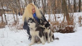 Winter landscape with blonde girl playing with siberian husky malamute dogs outside. stock footage