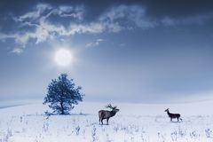 Winter landscape in blue color. Lonely tree and wild deer male and female in a snowy field stock photo