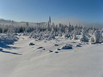 Winter landscape blue sky and fog at trees Stock Photos