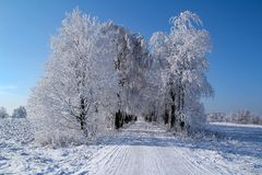 Winter landscape with blue sky. And the road and birches Royalty Free Stock Images