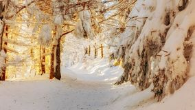 Winter landscape with blue sky. Snail icing on trees. Beautiful winter landscape. Stock Photos