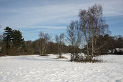 Winter landscape with blue sky and trees Stock Images