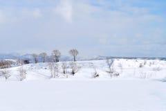 Winter landscape. Branch tree against blue sky in winter season at Hokkaido, Japan Stock Images