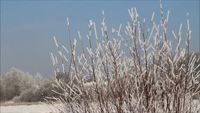 Winter landscape branches in hoarfrost stock footage