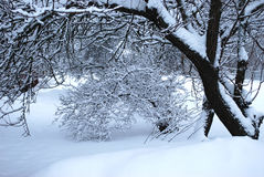 Winter landscape. Branches of trees in white fluffy to snow Royalty Free Stock Photo