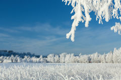 Winter landscape on a bright day Stock Photos