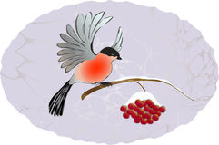 Winter landscape. Bullfinch on the branch of rowan. EPS10 vector illustration vector illustration