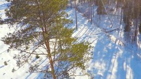 Winter landscape. Camera tilt up. Beautiful snow landscape. winter trees panorama. Sunset. Aerial view. Fly around the trees covered with snow stock video