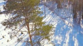 Winter landscape. Camera tilt up. stock video