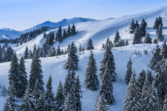 Winter landscape in the Carpathian Mountains Stock Images