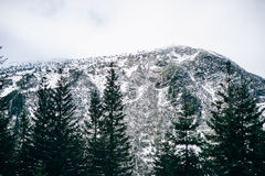 Winter landscape in the Carpathian mountains Royalty Free Stock Photo
