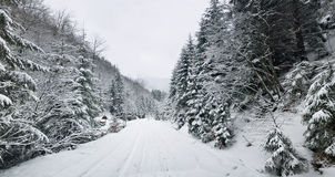 Winter landscape. Carpathians, Ukraine Stock Photo