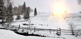 Winter landscape. Carpathians, Ukraine. Beautiful winter landscape with the river and pine trees Stock Photo