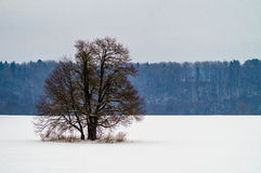 Winter landscape in Central Russia. Royalty Free Stock Images
