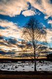 Winter landscape in Central Russia. Russian landscapes are diverse at any time of the year. In winter, the combination of forest, meadows and fields covered royalty free stock photos