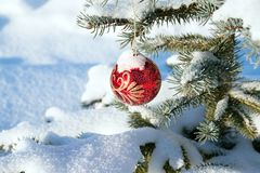 Close up branch Christmas fir tree decorated red ball Stock Image