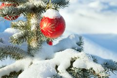 Winter landscape with Christmas fir tree decoration red ball and Royalty Free Stock Images