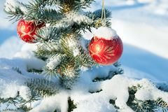 Winter landscape with Christmas fir tree decoration red ball and Royalty Free Stock Photos