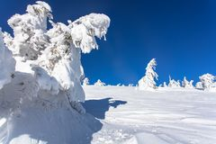 Winter landscape of a Christmas tree in the snow. snow-white beauty. Delightful winter landscape of a Christmas tree in the snow. snow-white beauty Stock Photography