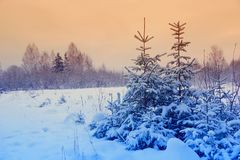 Winter landscape with Christmas trees. Martian sunset. Royalty Free Stock Photo