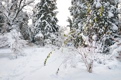Winter park. Winter landscape in a city park with fir trees covered by snow Stock Images