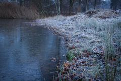 Winter landscape. City park with a pond in winter Royalty Free Stock Photography