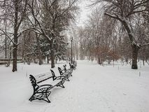 Winter landscape. City Park. Snow and snowfall. People walk.  Stock Photography