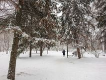 Winter landscape. City Park. Snow and snowfall. People walk.  Stock Image