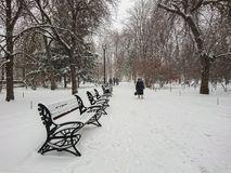 Winter landscape. City Park. Snow and snowfall. People walk.  Royalty Free Stock Photography