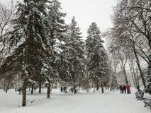 Winter landscape. City Park. Snow and snowfall. People walk.  Royalty Free Stock Image