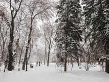 Winter landscape. City Park. Snow and snowfall. People walk.  Stock Images
