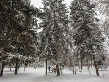 Winter landscape. City Park. Snow and snowfall. People walk.  Royalty Free Stock Images